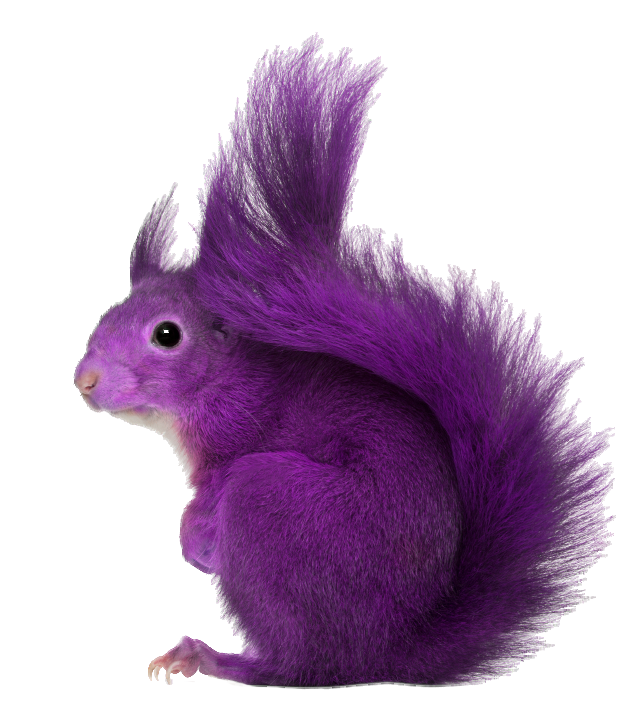Purple-Squirrel.png